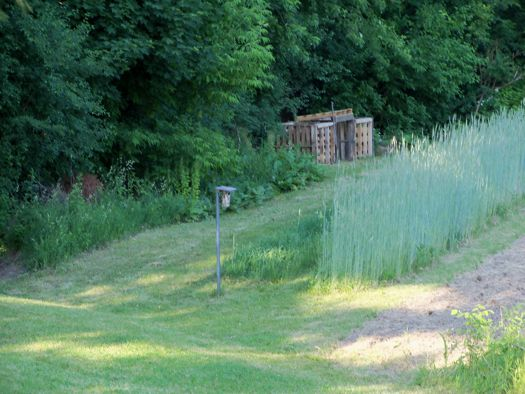 Howard Stoner rye field.jpg