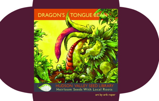 Hudson Valley Seeds - Dragon Tongue