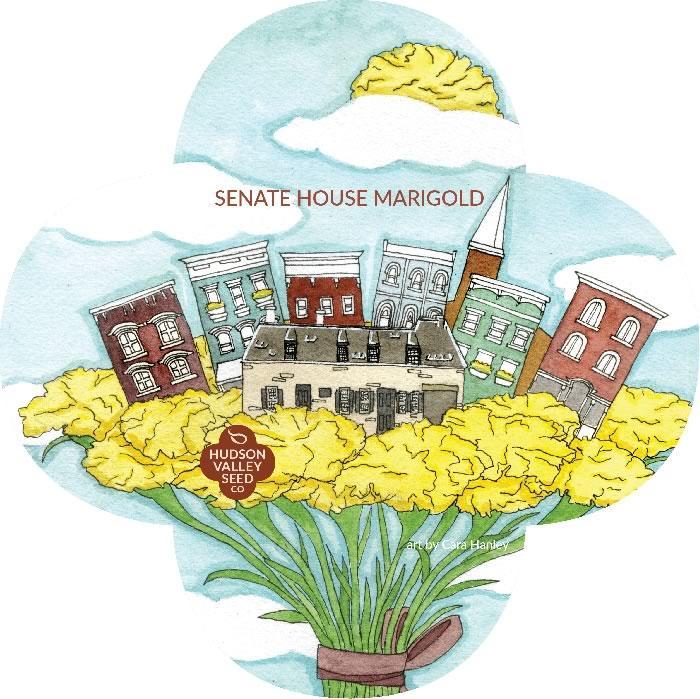 Hudson Valley Seed Catalog Senate House Marigold Cara Hanley