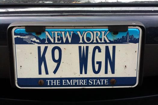 K9_WGN.jpg