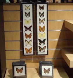 NYSM butterflies.jpg