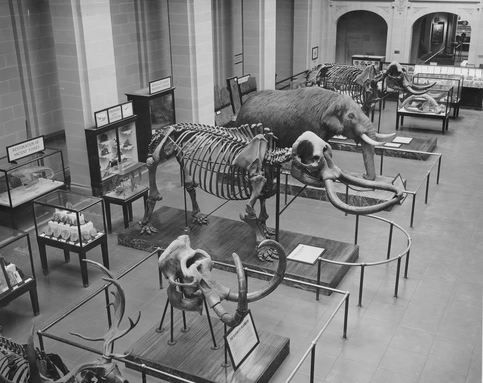 NYS Museum mastodons State Education Building