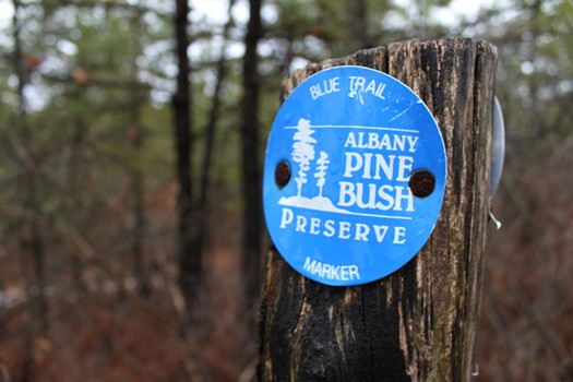 Pine Bush Marker