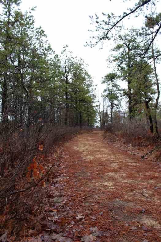 Pine Bush Needle Trail