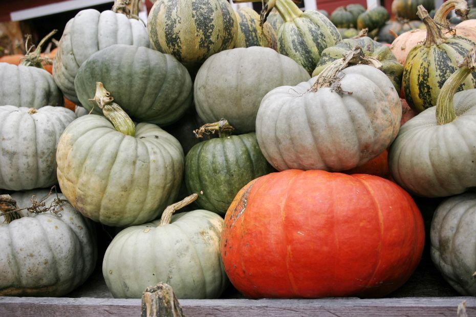 Pumpkins -- Bennett Campbell.jpg
