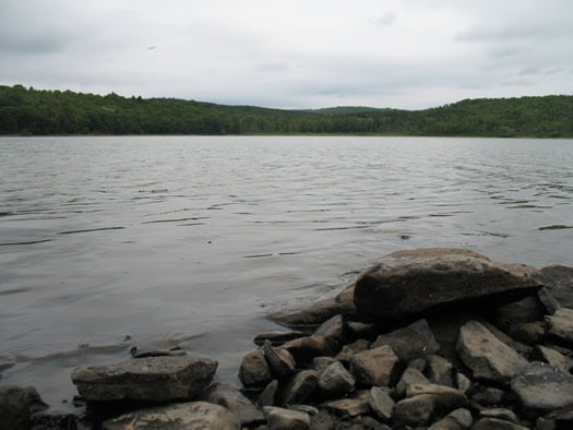 huyck lake myosotis