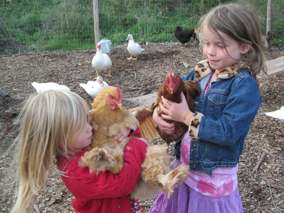 Radix 2012 kids and chickens 2.jpg