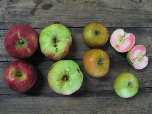 unusual apples from Samascott