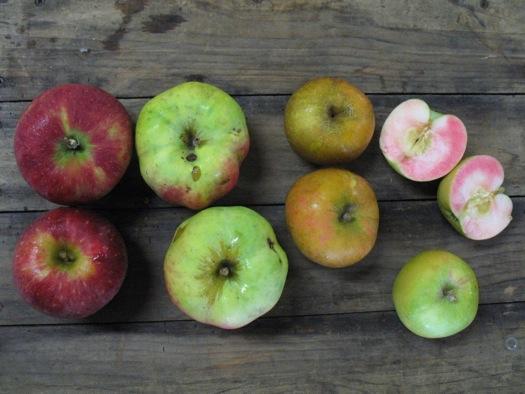 unusual apples from Samascott