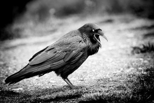 Scary crow.jpg