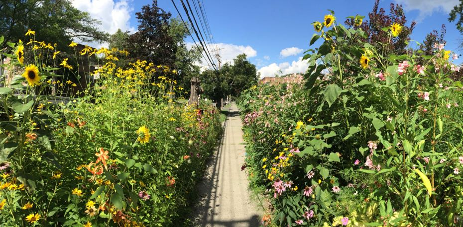 South Allen flower path
