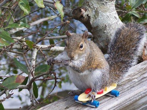 Squirrel on skateboard.jpg