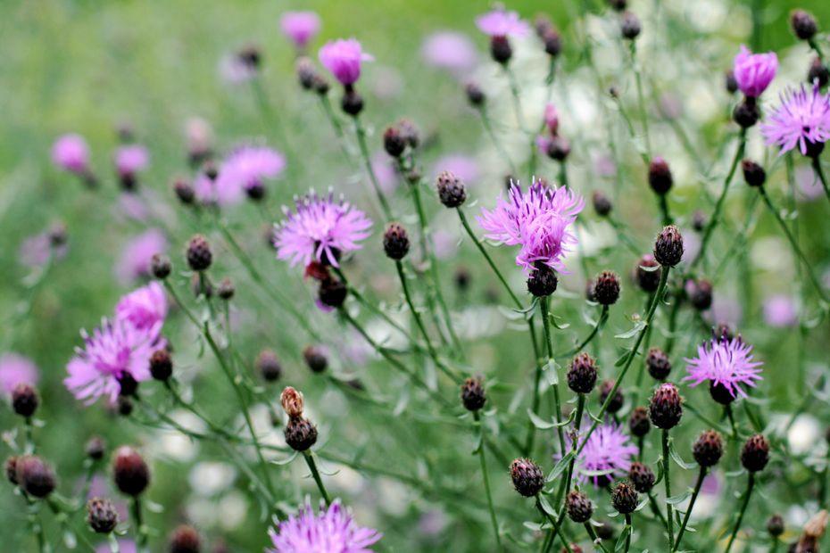 SummerKimDWildflowers.jpg