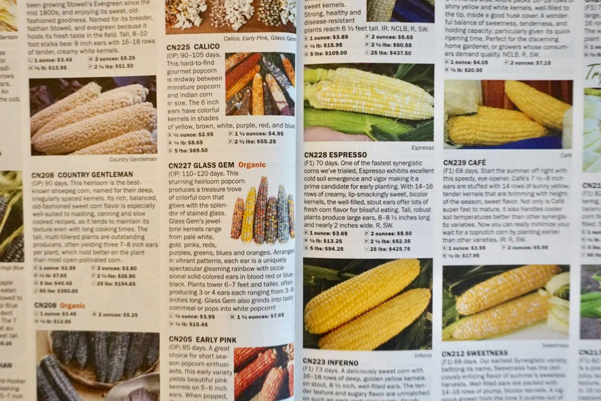 The simple joy of seed catalogs | All Over Albany