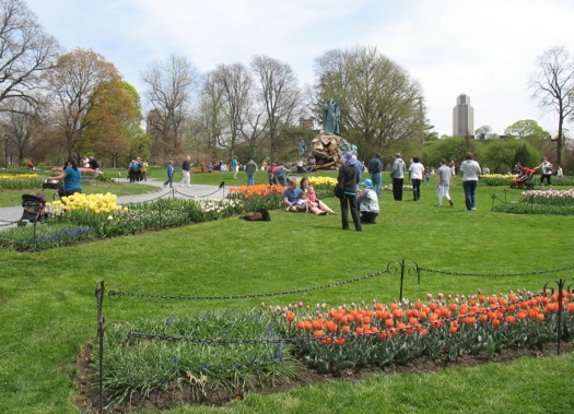 Washington Park tulips 2014