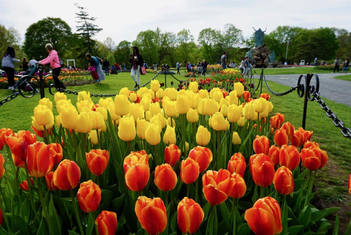 Washington Park tulips 2018 Moses background