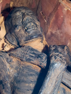 albany institute mummy