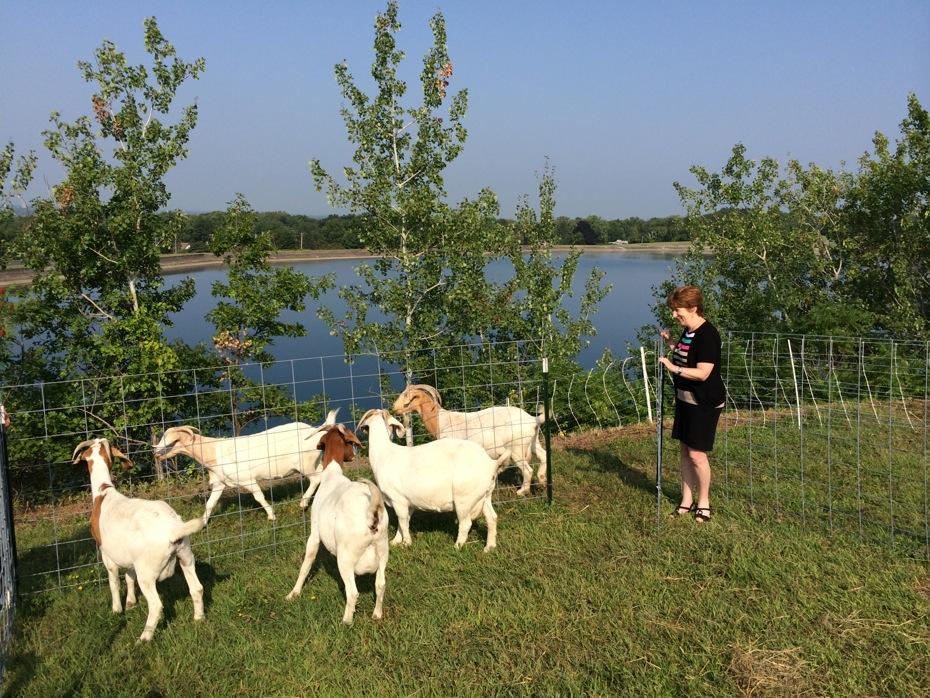 albany_loudonville_reservoir_goats_01.jpg