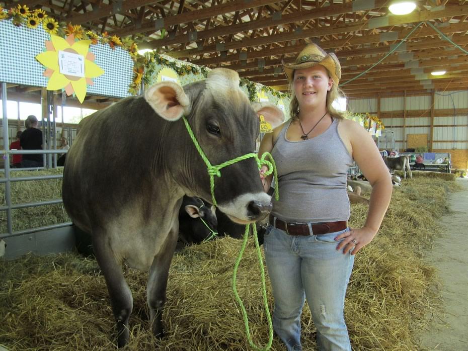 altamont_fair_2013_4-H_cows_Hannah_and_Prickers.jpg