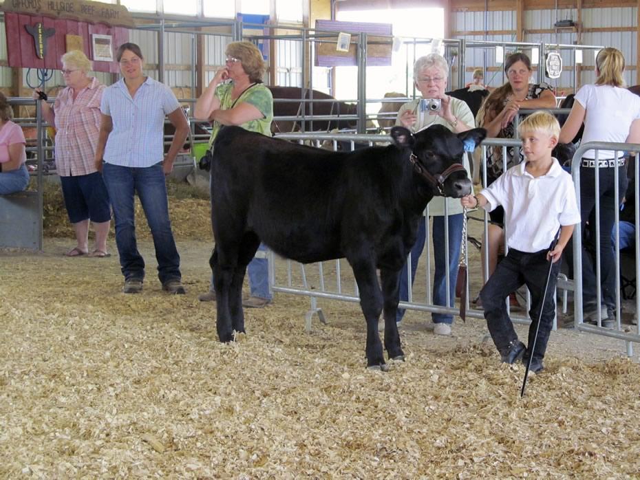 altamont_fair_2013_4-H_cows_Hunter_Chloe_show.jpg