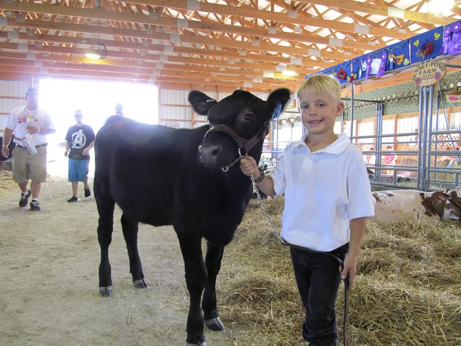 altamont_fair_2013_4-H_cows_Hunter_and_Chloe.jpg