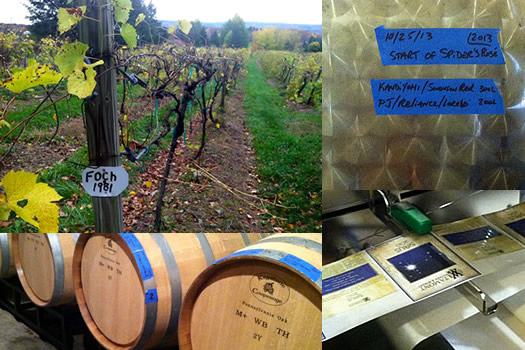 altamont vineyard composite