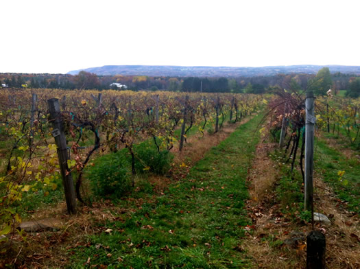 altamont_vineyard_view.jpg