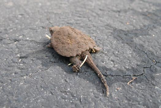 baby turtles 6