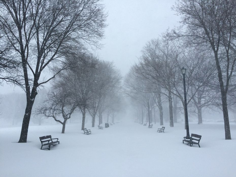 blizzard_Albany_2017_16.jpg
