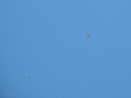 blue sky hawks