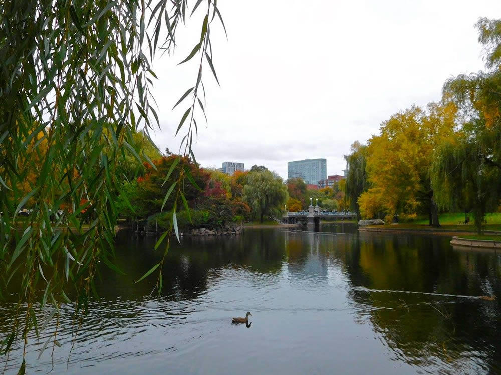 boston_julie_madsen_Public_Garden_lake.jpg
