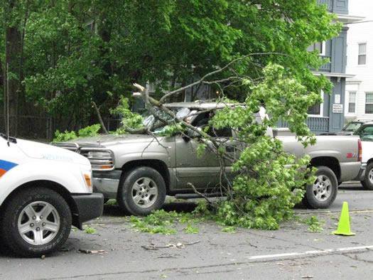 branch on truck