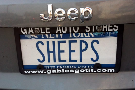 bumper_gawking_SHEEPS.jpg