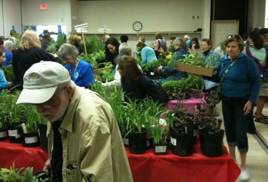 cornell cooperative extension albany county plant sale