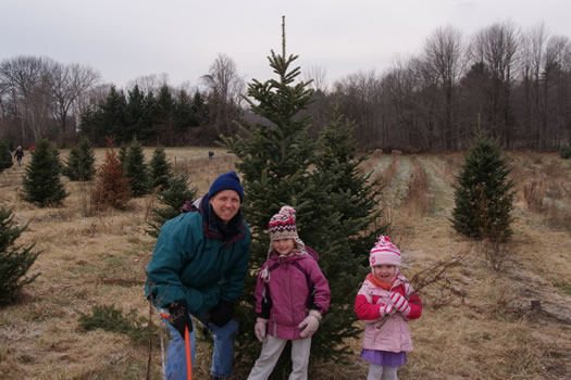 christmas tree farm beltramo