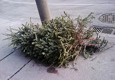 christmas tree on sidewalk
