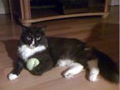 craiglist superior cat