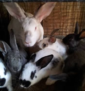 craigslist adorable rabbits