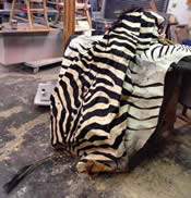 craigslist antique zebra skin