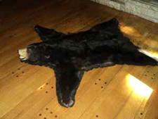 craigslist bear rug