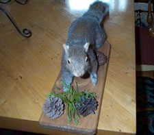 craigslist stuffed squirrel