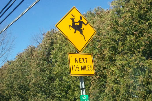 deer riding sign bethlehem