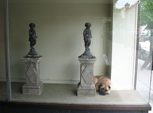 dog in gallery window