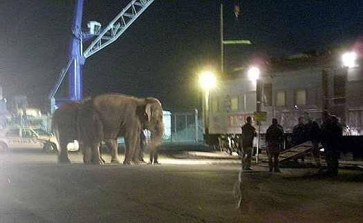 elephants at port
