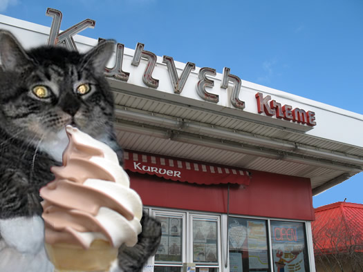 flabby tabby I can haz kurver kreme