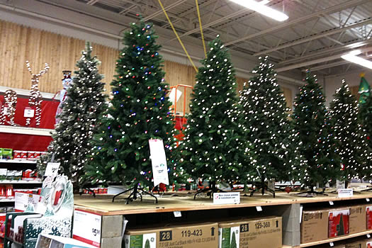 home depot albany pre-halloween christmas trees