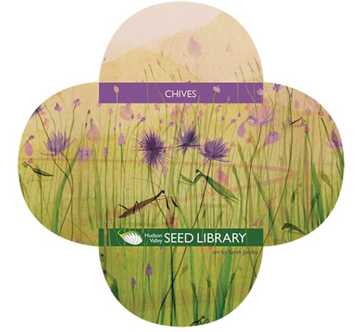 hudson_valley_seed_library_chives.jpg