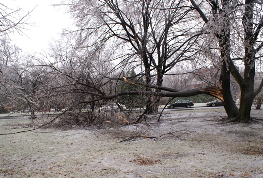 ice storm 2008-12-12 big branch down