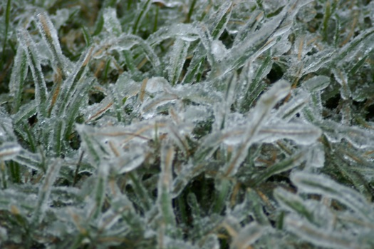 ice storm 2008-12-12 grass