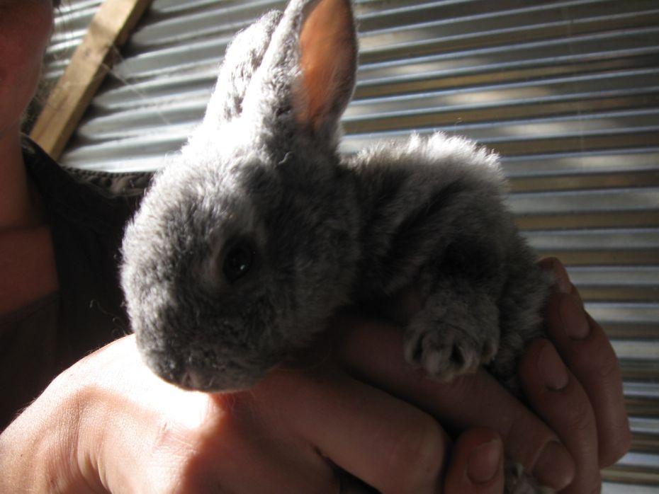 Little gray bunny.jpg
